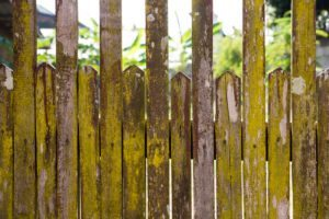 Fence Maintenance Tips for Moisture and Mold